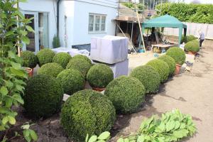 Garden planting begins