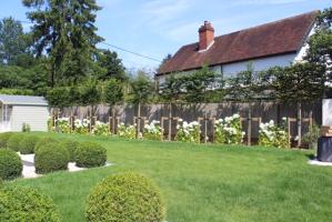 Rear garden planting