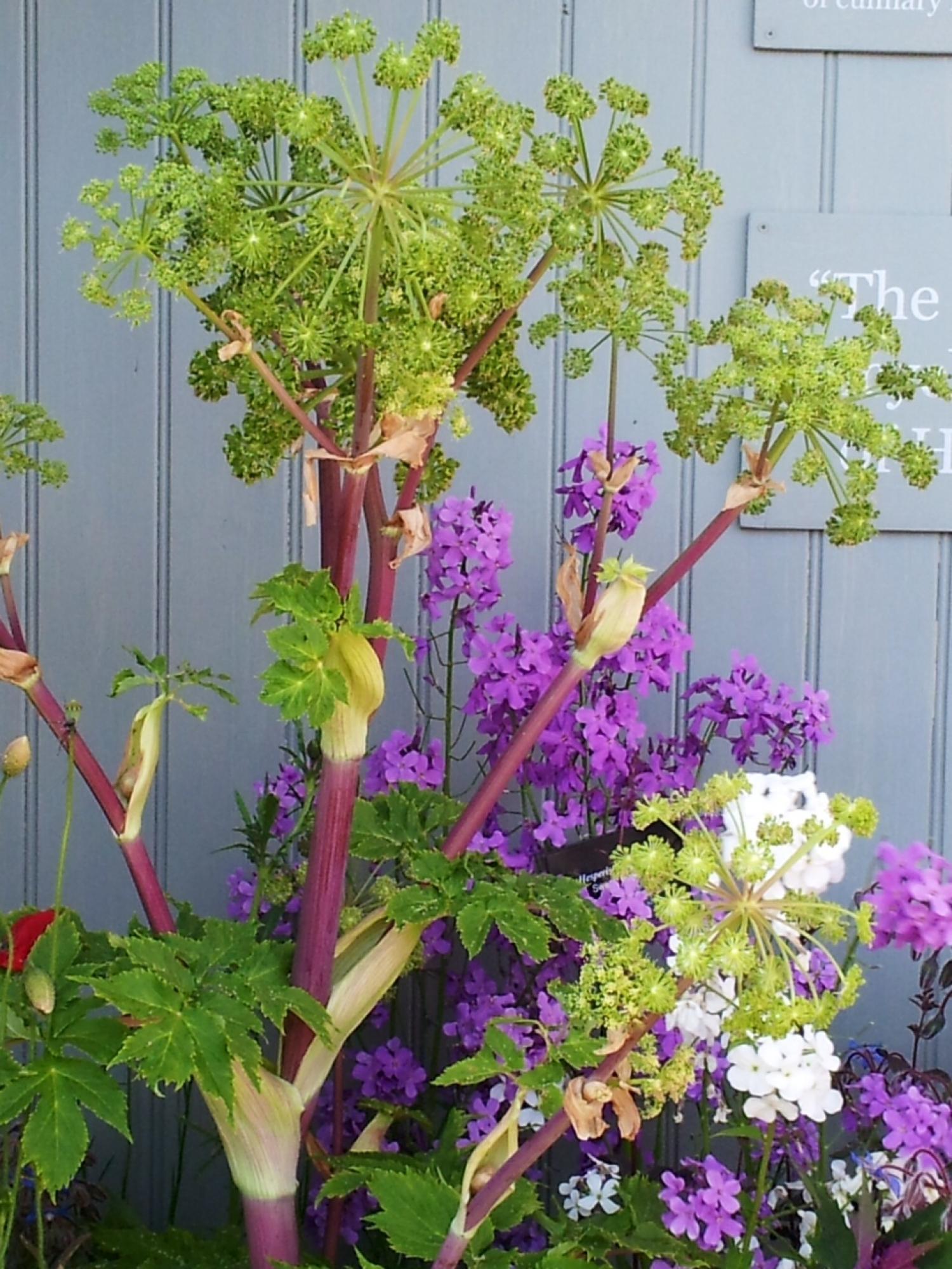 Chelsea Flower Show Life At Nettlebed